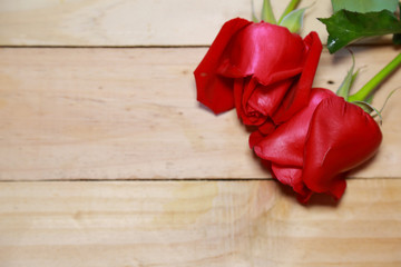 Design ฺBeautiful red roses on old aged wood background. valen