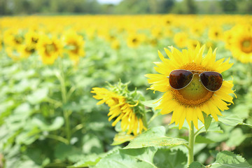 Sunflower and glasses