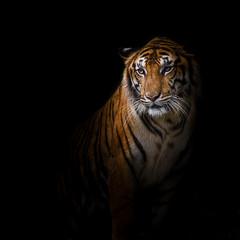 Photo sur Aluminium Animaux de Hipster Tiger.
