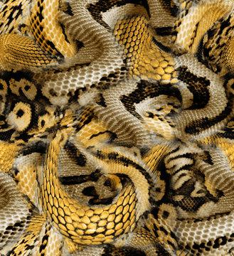 yellow snake skin