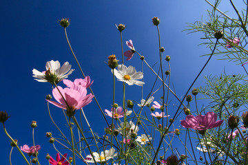 colorful flowers on dark blue sky in sunny days