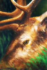 oil painting detail of deer head with antlers. graphic version.