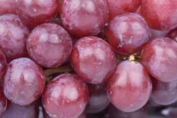 close up red grapes