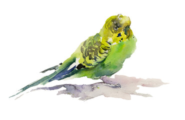 Green and yellow parrot on white background. Watercolor painting, hand drawn.