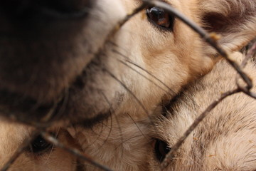 a shelter for dogs, dog's noses stuck through the bars