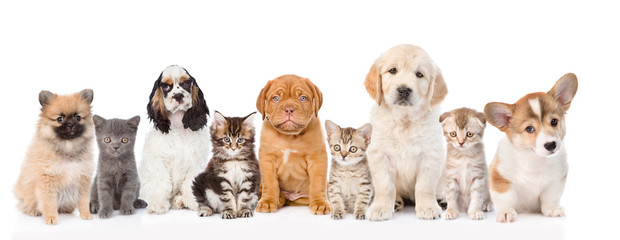Group of cats and dogs sitting in a row. isolated on white