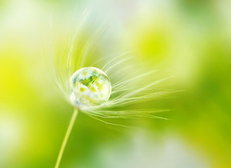 Rain drop dew on a dandelion seed in the wind  with reflection of flowers daisies on a meadow outdoors spring macro summer with soft focus.  Amazing delicate fresh air artistic image.