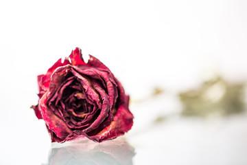 Red Dry Rose