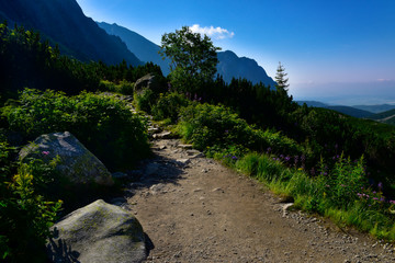 Wall Mural - Stone path in the mountain. Tatra mountain park
