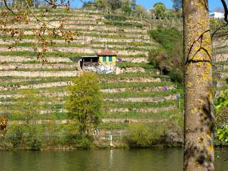 Weinbau, Steillage, Neckartal
