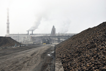 One of the most powerful in Ukraine - Chortkiv sugar factory. Beet materials in piles.