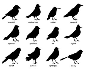 Silhouettes of little birds