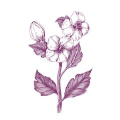Purple-Floral9