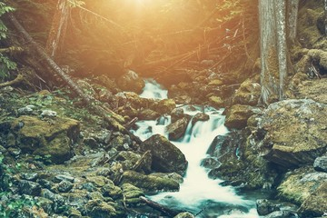 Wall Mural - Spring Water River