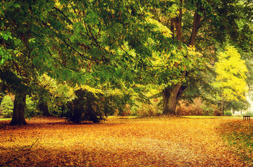 Autumn park with orange trees and empty alley , natural seasonal hipster background