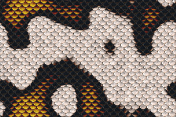 Repeating  snake skin  pattern