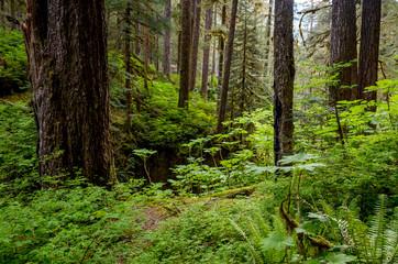 Olympic National Park rainforest