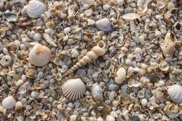 Shells on the beach background.