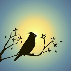 Silhouette Bird And Sunset Vector Illustration