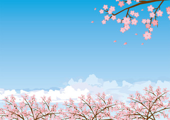 桜 青空イメージイラスト