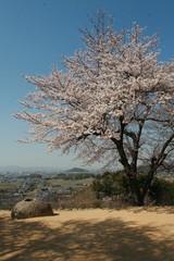 Cherry blossom on Yoshinoyama, Nara, Japan spring landscape