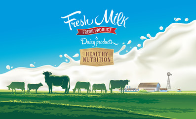 Rural landscape with herd cows and farm with splash milk in background. Vector illustration.