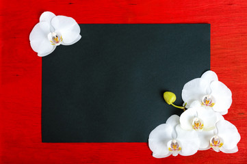 The black rectangle (A4 size) on a red wooden background decorated with white orchid flowers. Free space for your projects (notes).