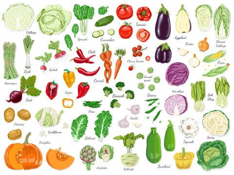 Big set of colored vegetables