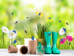 Garden tolls and spring seedling on wooden background. Rubber, narcis and tulips.