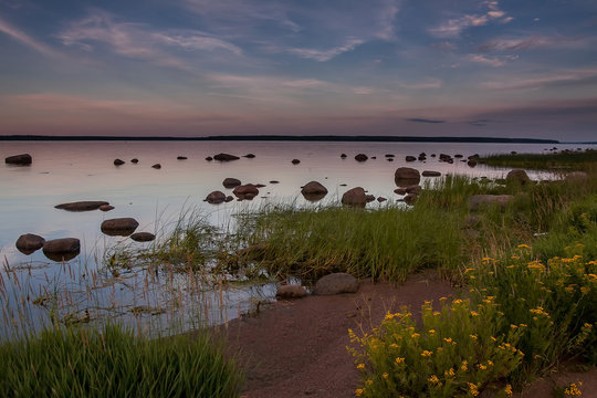 Stony beach at sunset with yellow flowers