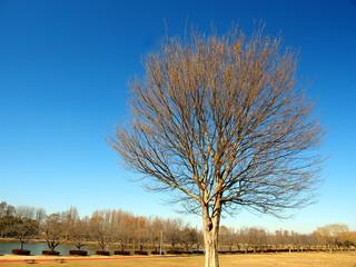 冬の草原の枯れ木