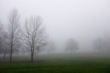 Park through thick fog