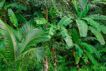 Tropical rain forest and jungle greenery with nice mixture of pl