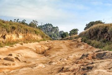 Scenic path in Horton Plains