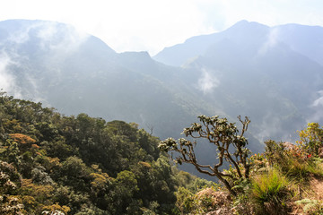Scenic path in Horton Plains