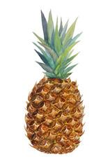 Watercolor fresh pineapple