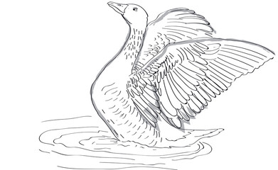 goose - drawing on tablet