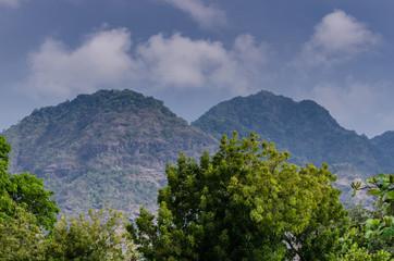 baeume und berge im urlaub