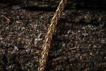Jewelry on tree bark