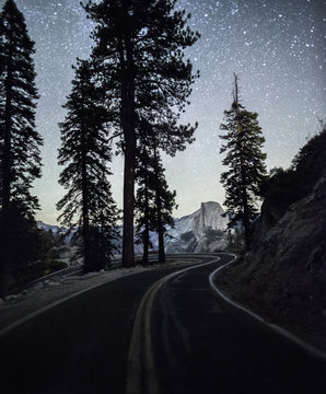 Trees by road against starry sky during winter