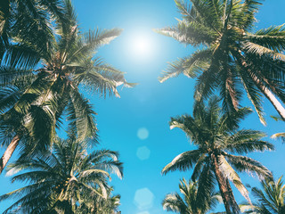 Palm trees over boue sky