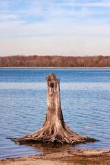Tree Stump in Reservoir Lake