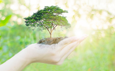Ecology concept Human hands holding big plant with on blurred sunset background,World Environment Day
