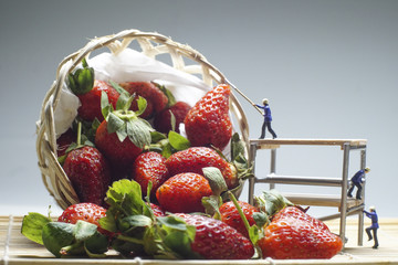 Strawberries Harvest with Miniatures