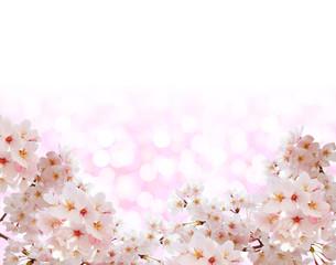 桜と春色の背景