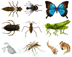 Insects set on white background