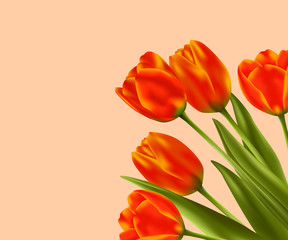 Spring flower background with red tulips. Vector illustration.
