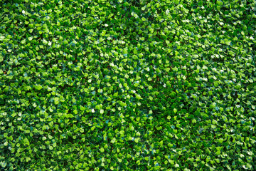 plastic fake green ivy plant nature background.