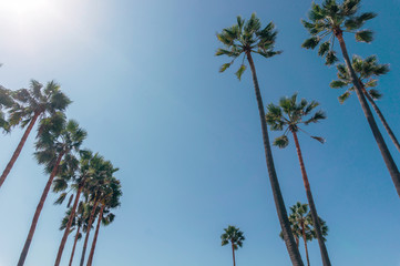 Palm trees on a Venice beach in California