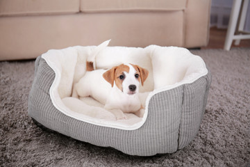 Cute funny puppy in dog bed at home